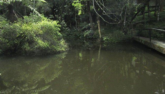 Foto - Área de Terras 40 ha - Sítio Colinas de São Pedro - Sapucaí Mirim - MG - [24]