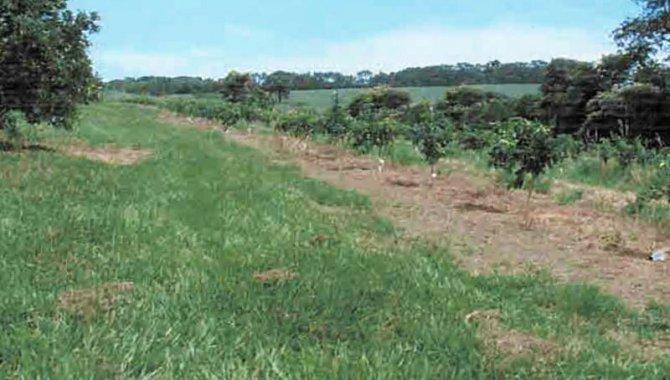 Foto - Área de Terras 16 ha - Guaraci - SP - [1]