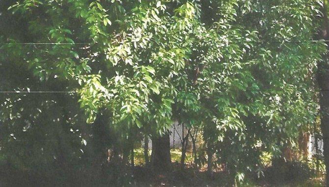 Foto - Direitos sobre Terreno 910 m² - Parque Residencial Shambala - Atibaia - SP - [2]