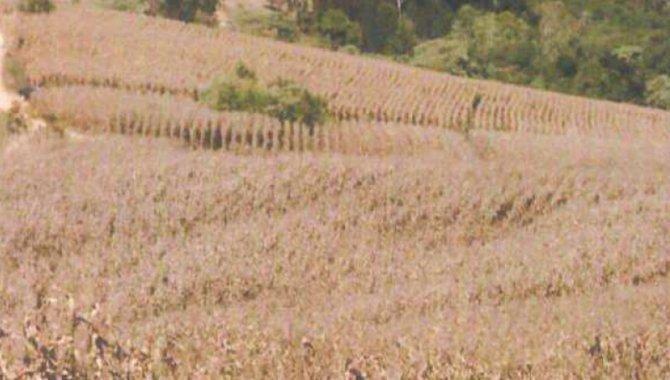 Foto - Direitos sobre Imóvel Rural 65 ha - Ribeirão Fundo - Munhoz - MG - [11]