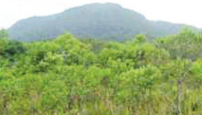 Foto - Área de Terras 90.000 m² - Arrozal - Ilhabela - SP - [4]