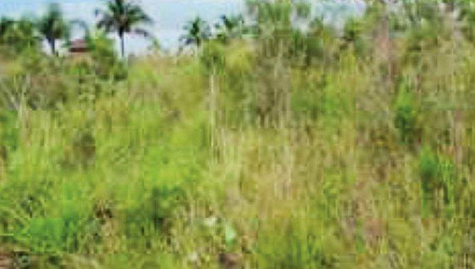 Foto - Área de Terras 90.000 m² - Arrozal - Ilhabela - SP - [3]