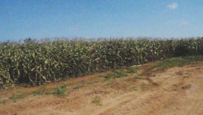 Foto - Imóvel Rural 24 ha - Coronel Macedo - SP - [1]